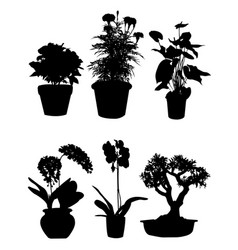 plants and flowers pot silhouette vector image