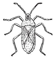 Stink bug vintage vector