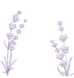 summer flowers with calligraphy sign lavender vector image