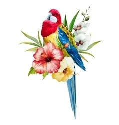 Watercolor rosella bird vector image vector image