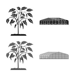 Design of greenhouse and plant sign set of vector