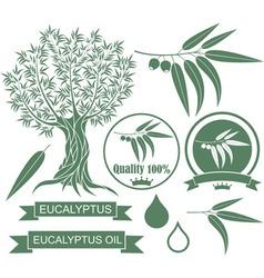 Eucalyptus vector image