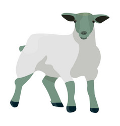 little white mountain sheepscottish fold sheep vector image