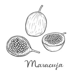 Maracuja passion fruit vector