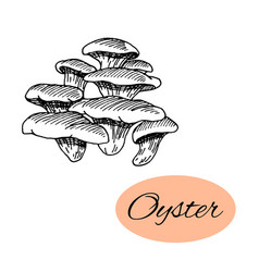 Oyster ink drawing vector