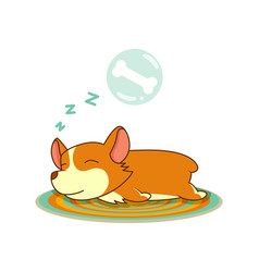 welsh corgi image isolated in white vector image
