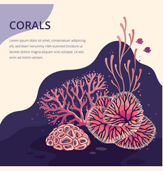 beautiful coral card for print vector image