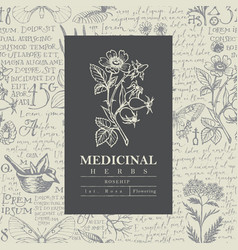 Beautiful label or banner for rosehip vector