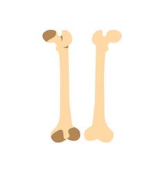 Bones icon flat style vector