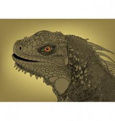 iguana head vector image