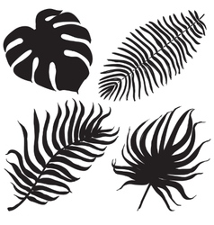 set with tropical exotic leafes vector image