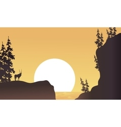 At afternoon antelope silhouette beatiful vector image