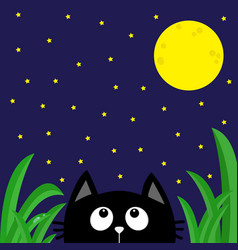 black cat looking stars and moon in dark vector image