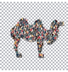 Camel isometrick people 3d vector