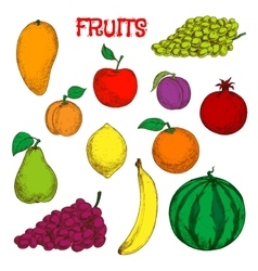 Ripe and fresh fruits colorful sketch symbol vector image