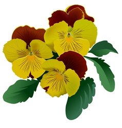 Three yellow pansy flowers with leaves vector image vector image