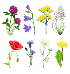 Wildflowers and herbs botanical set with anise vector
