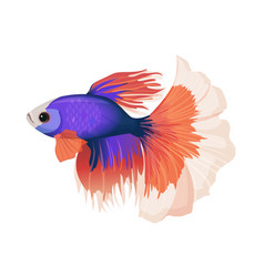 betta small colorful freshwater ray-finned fish vector image