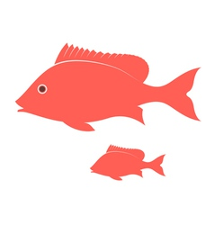 Crimson Snapper vector