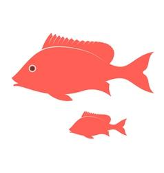 Crimson snapper vector