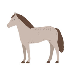 cute grey horse isolated on white background vector image