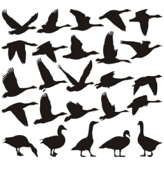 Geese silhouette vector