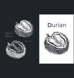 hand drawn durian icons vector image
