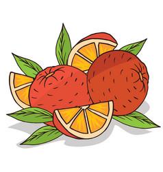 Isolate ripe oranges fruit vector
