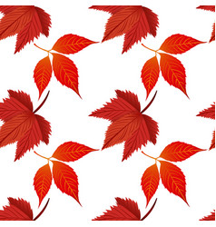 red autumn maple leaves white background im vector image