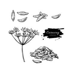 Caraway hand drawn set vector image