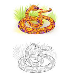 Fantasy fairyland royal python colorful vector