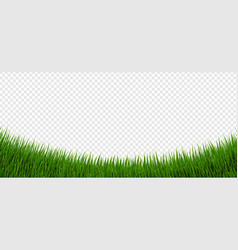 Green grass border and isolated transparent vector