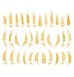 Hand drawn set of yellow wheat ears icons vector