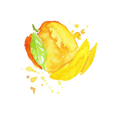 juicy ripe mango fruit watercolor hand painting vector image