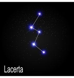Lacerta Constellation with Beautiful Bright Stars vector image