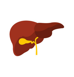 Liver icon flat style vector