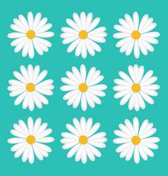 Pattern flower daisy vector