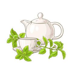 Stevia tea vector