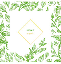 template branch green organic vector image