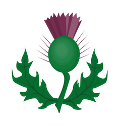 thistles with green leavesmedicinal plant of vector image