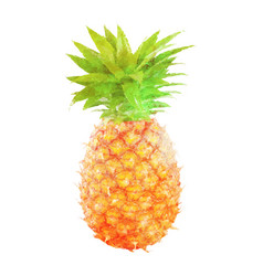 Watercolor pineapple fruit on white vector