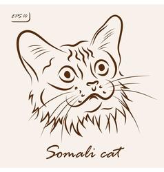 Somali cat vector