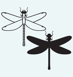 Dragonfly Anax Imperator vector image vector image