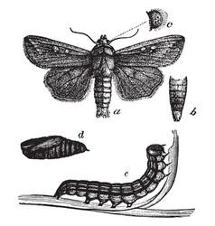 Army worm vintage vector