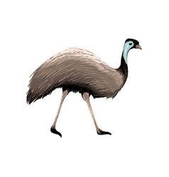 Australian animal vector