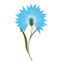 Blue flower cornflower isolated on white vector
