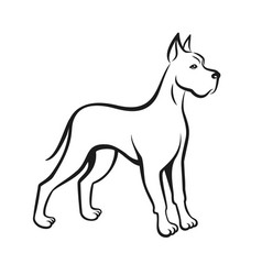 Dog line drawing great dane can be used as logo vector