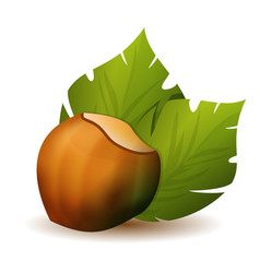 Hazelnut with green leaves icon vector