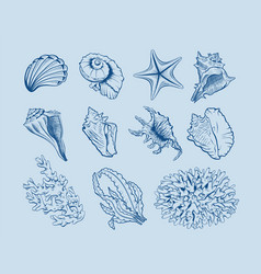 marine fauna and flora set vector image