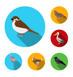 types of birds flat icons in set collection for vector image